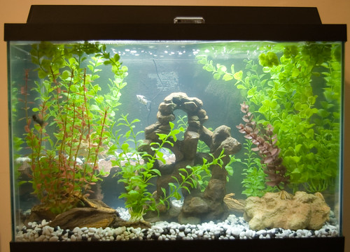 pets fish aquarium