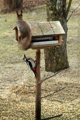 orava vs. tikka - by ansik