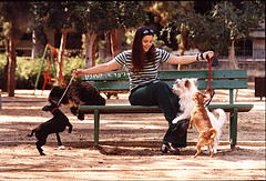 a girl with 4 dogs-   (Dubi Feiner) Tags: life city light people woman dog man tree art love girl beautiful face topv111 bench fun photography israel topv333 play topv444 documentary topv222 moment  decisive   nikonlens     dubifeiner wwwornadubicoil