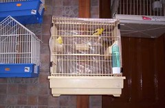 españa geotagged spain tenerife canary canaries canaryislands islascanarias icod geo:lat=28367306 geo:lon=16719526