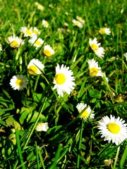 all the flowers of the meadow will clap their hands (Jon Madrigal) Tags: park flowers sun flower macro green grass washington spring northwest blossom wa lewisville battleground lewisvillepark