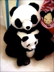 137051970 36b3b67d3f m Realistic Stuffed Animals, at Parties