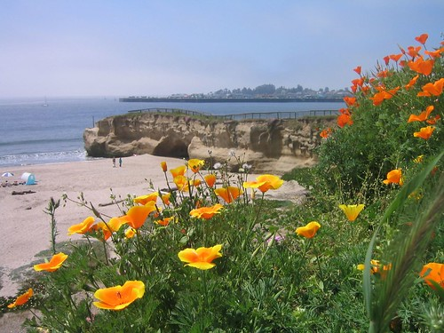 The Finger, Santa Cruz