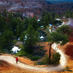 Footpath (Imapix) Tags: travel trees canada art nature canon photography utah photo foto photographie image quebec hiking qubec bryce imapix foothpath ponderosapines gatanbourque copyright2006gatanbourqueallrightsreserved gaetanbourque pix50 imapixphotography gatanbourquephotography