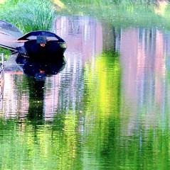 Claude (Harry Mijland) Tags: holland reflection green netherlands dutch boat utrecht nederland explore monet impressionism rembrandtkade minstroom dearharry harrymijland