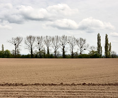 """same field : little trees • <a style=""""font-size:0.8em;"""" href=""""http://www.flickr.com/photos/75475694@N00/142217189/"""" target=""""_blank"""">View on Flickr</a>"""