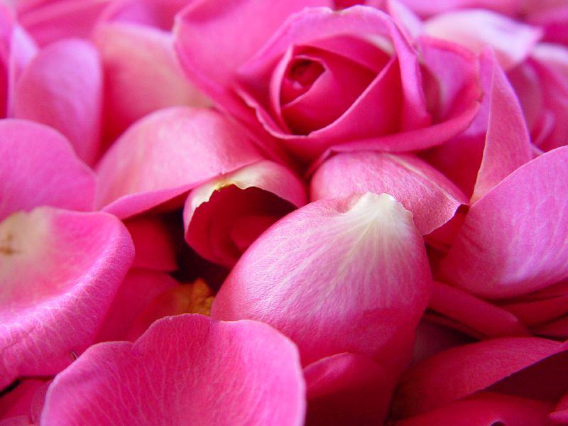 Rose Petals 2