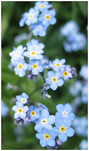 ...sending you forget-me-nots...