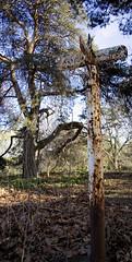 Rust Area (diathesis) Tags: ca toronto ontario canada tree nature sign rust highpark urbandecay comparison