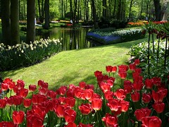 Keukenhof, Holland- bulbflower garden (Coanri/Rita) Tags: holland garden europe tulips thenetherlands 2006 publicgarden keukenhof bulbflowers lisse coanri bulbfowers favoritegarden bulbflowergarden photofaceoffwinner