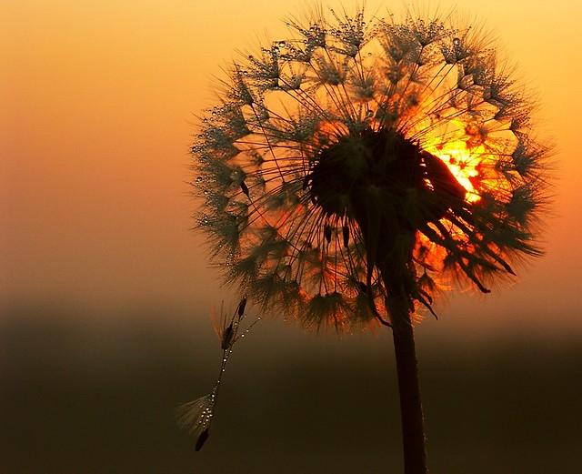 dawn passion