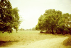 country road (Stitch) Tags: trees film sepia rural countryside lomo lca philippines idyllic carabao
