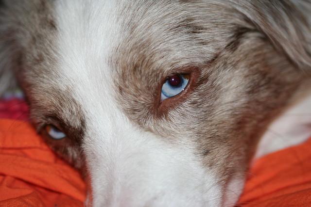 Char's eyes