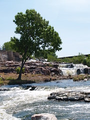 tree by water (Paparazzi Liz) Tags: water bibleillustration psalms siouxfalls