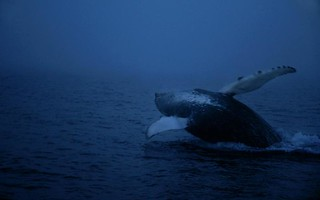 whale, iceland