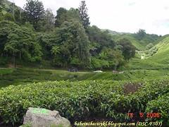 boh - sg palas11a landy (babe_kl) Tags: cameronhighlands teaplantation bohplantationsgpalas bohteacentre