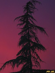 Solitario_not so bad seed (Master Mason) Tags: trees sunset sky italy color tree home nature colors alberi contrast garden casa italia tramonto dusk balcony natura cielo frommywindow albero luce balcone romagna forl natureboy contrasto nickcaveandthebadseeds sbtxt luceimpazzita