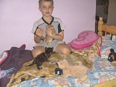 Kitipildid (34) (Siki:)) Tags: kass kiisud punane