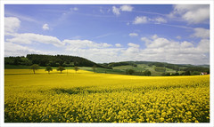 Yellow Landscape (Winterberg Germany) (shoot it!) Tags: 2003 travel juni gemany duitsland