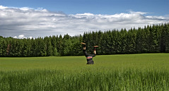 Jack the jumper (stoffen) Tags: green nature field grass norway pine clouds contrast fun back spring friend shoes upsidedown highcontrast center shorts reversed dorsal spruce pinetrees centered facedown blackclothes åsgårdstrand