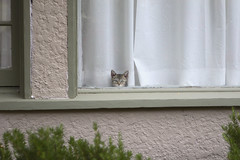 tiny (Orrin) Tags: cute window cat kitten waiting little sweet tiny awww alert unblinking patiently ittybitty moo1