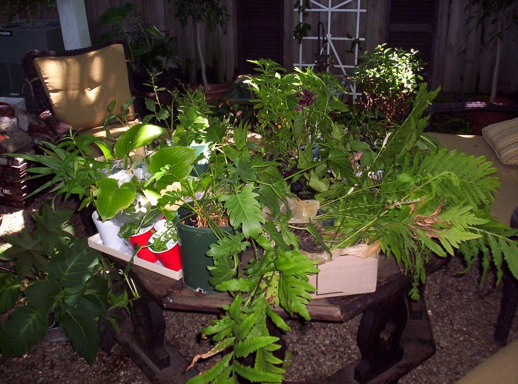 gardenweb louisville plant swap june '06