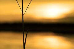twig (shoothead) Tags: orange sun blur sunrise golden topv555 warm canon20d innocent maine clean serenity twig glowing marsh portfolio hopeful payitforward