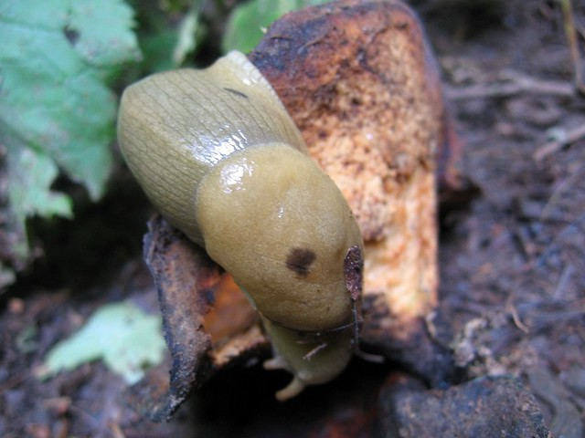 slug on a fungus