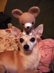 I Am The Next William Wegman (Angela.) Tags: dog chihuahua lulu crochet explore softie chi stuffedanimal amigurumi explored angryknittercom theangryknitter