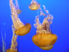 Monterey Bay Aquarium, CA (1) - by Kenny and Steve