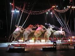 Elefantes en el circo