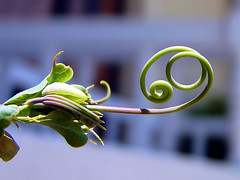 Tendril - by Hamed Saber
