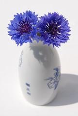 [フリー画像] [花/フラワー] [菊/キク] [ヤグルマギク] [花瓶] [ブルー/花]      [フリー素材]