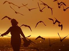 Birds Surrounding (black&white) Tags: ocean sunset people orange love beach water birds silhouette landscape flush kiss2 straightflush kiss3 kiss1 kiss4 kiss5 flickrpoker 222views2favs 333view3favs 444view4favs