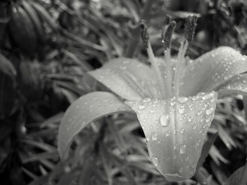 Black & White Droplets