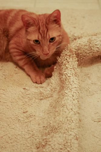 cat bath mat trogdor