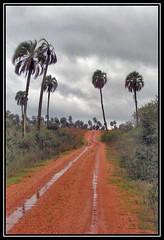Colgada de la palmera (..felicitas..) Tags: paisajes argentina landscape landscapes paisaje palmeras z2 entrerios elpalmar felumolina parquenacionalelpalmar felicitasmolina
