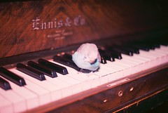 minuet in c (david samuel) Tags: novascotia piano budgie dartmouth
