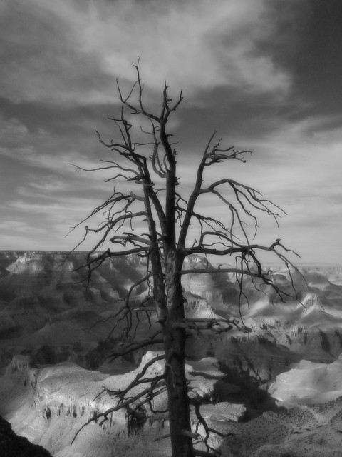 Tree, Grand Canyon, Arizona