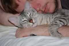 Loveable (Randifity) Tags: cat kitten kitty cuddly cuddle egyptianmau bastet