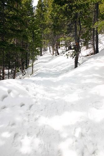 Where'd the Trail Go?