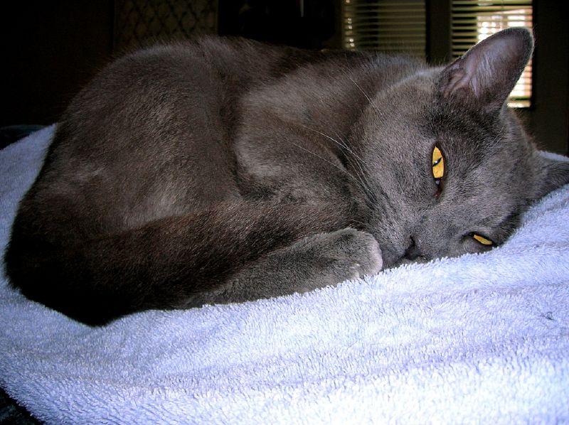 Catnap