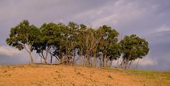 Shendurney Wildlife Sanctuary