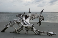 Driftwood and Lighthouse One