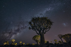 The Invasion (TheFella) Tags: africa travel trees sky slr nature night digital forest photoshop stars landscape photography star photo aloe nikon nightscape african space astro nighttime photograph astrophotography processing nightsky dslr namibia invasion constellations cosmos constellation d800 milkyway namibian keetmanshoop southernafrica quivertree postprocessing kokerboom starscape travelphotography quivertrees aloedichotoma quivertreeforest southernnamibia thefella starphotography kokerbooms choje conormacneill republicofnamibia republiknamibia republiekvannamibi astrolandscape thefellaphotography