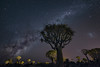 The Invasion (TheFella) Tags: africa travel trees sky slr nature night digital forest photoshop stars landscape photography star photo aloe nikon nightscape african space astro nighttime photograph astrophotography processing nightsky dslr namibia invasion constellations cosmos constellation d800 milkyway namibian keetmanshoop southernafrica quivertree postprocessing kokerboom starscape travelphotography quivertrees aloedichotoma quivertreeforest southernnamibia thefella starphotography kokerbooms choje conormacneill republicofnamibia republiknamibia republiekvannamibië astrolandscape thefellaphotography