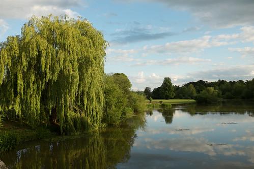 By the willow tree ©  Still ePsiLoN