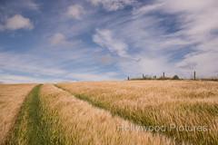 DSC_6059 (Fran Hollywood Autosportpics.com) Tags: ireland summer sky field barley clouds rural landscape countryside farming cereal harvest crop wexford sunnysoutheast leinster arable curracloe