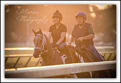 (EASY GOER) Tags: summer vacation horses horse ny newyork tourism sports beauty race canon fun athletics track saratoga competition upstate running racing course event 5d ponies athletes tradition races sporting spa thoroughbred equine exciting thoroughbreds compete markiii equines