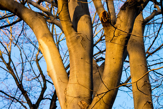 Marott Nature Preserve - December 28, 2016
